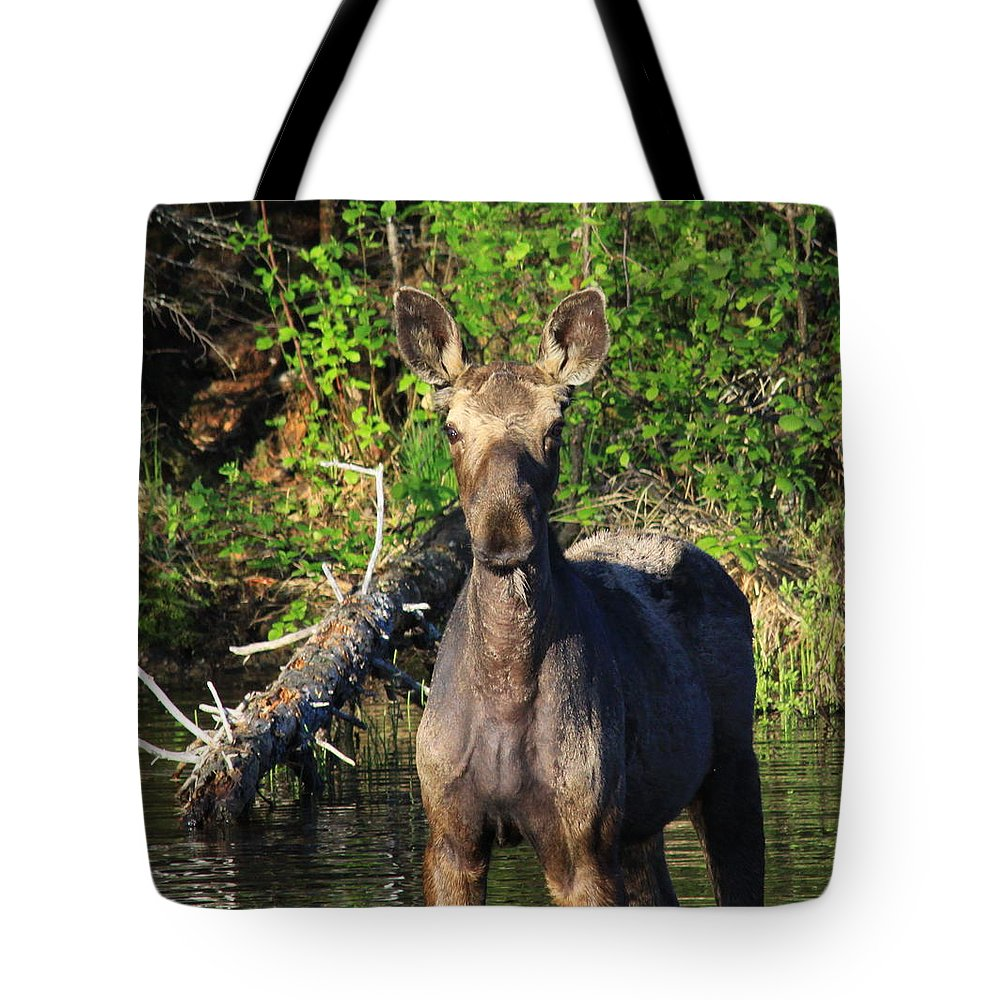 Moose Tote Bag featuring the photograph Hi by Joi Electa
