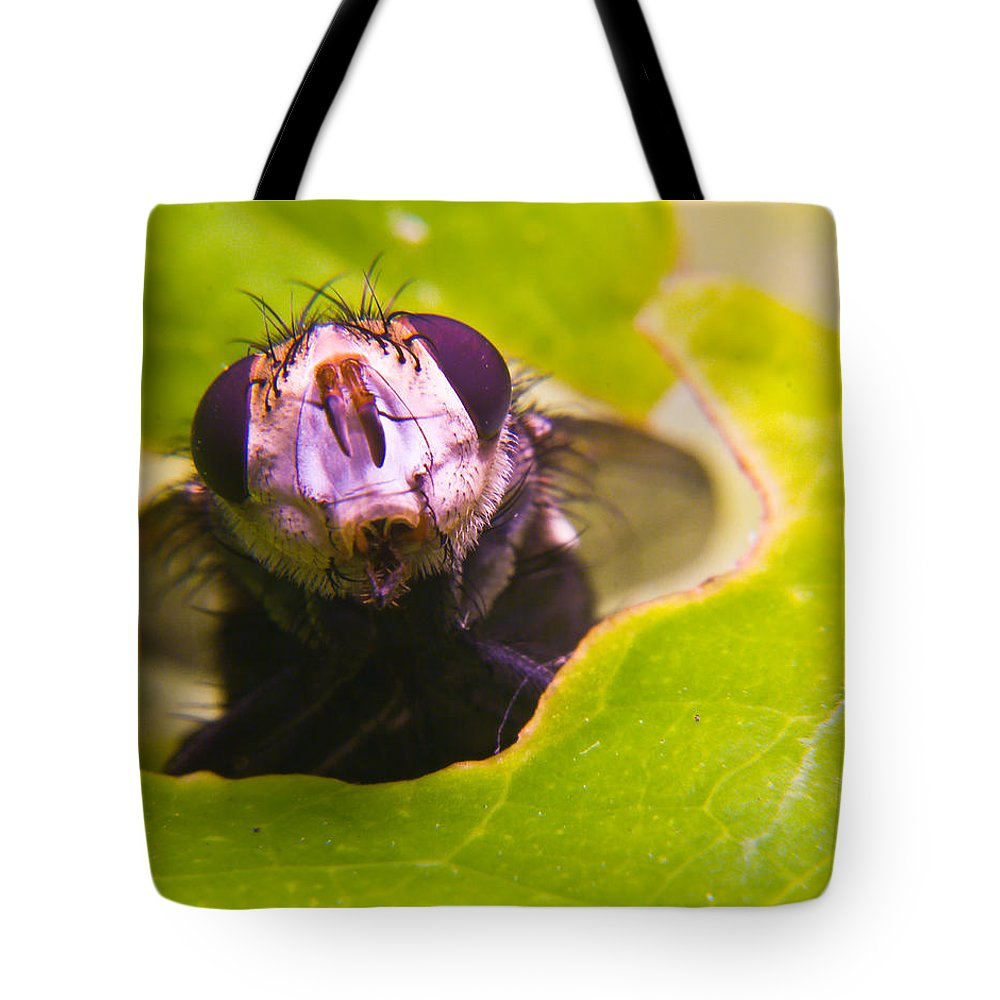 Fly Tote Bag featuring the photograph Hi There by Douglas Barnett