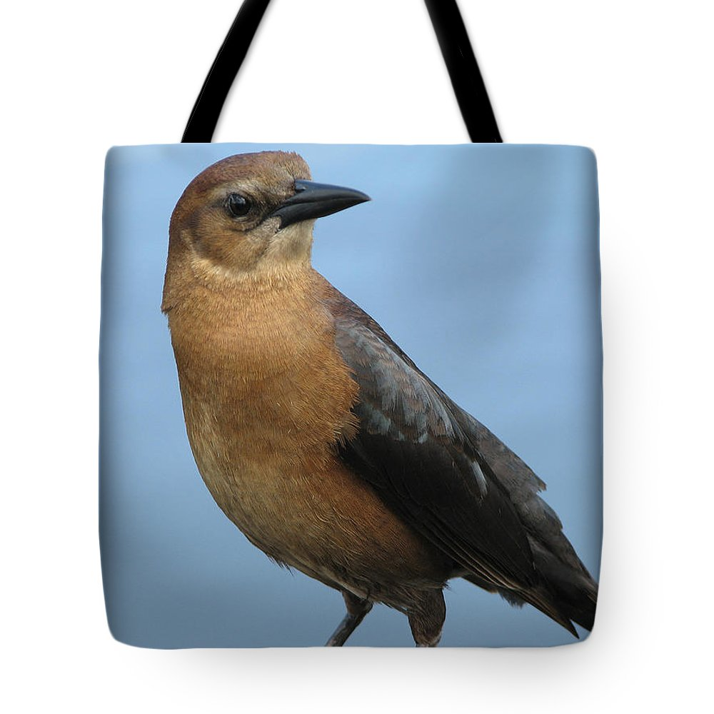 Bird Tote Bag featuring the photograph Hi There by Stacey May