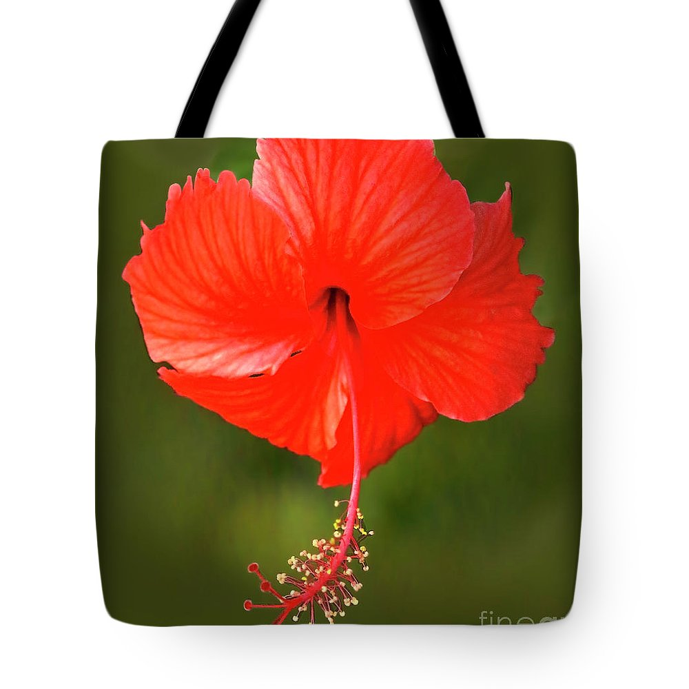 Hibiscus Tote Bag featuring the photograph Hibiscus by Edita De Lima
