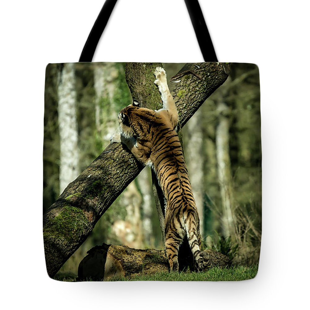 Tiger Tote Bag featuring the photograph Hide And Seek by Chris Boulton