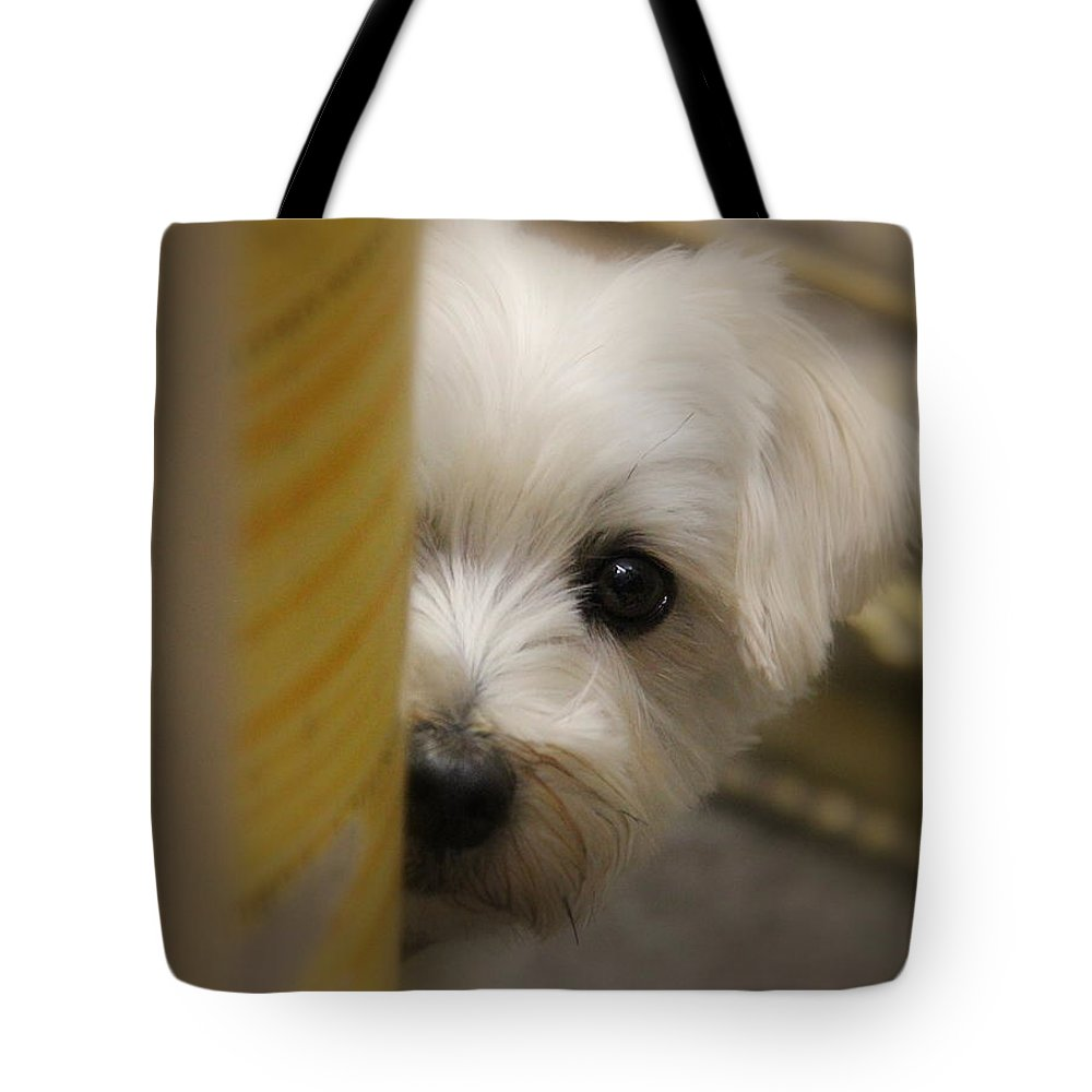 Hide And Seek Tote Bag featuring the photograph Hide And Seek by Ed Smith