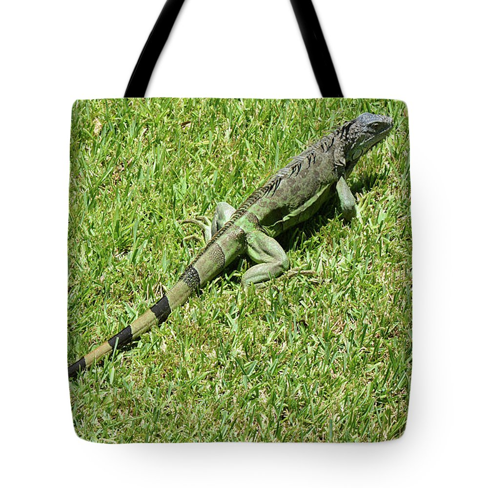 Iguana Tote Bag featuring the photograph Hiding In The Open by Arlin Harder