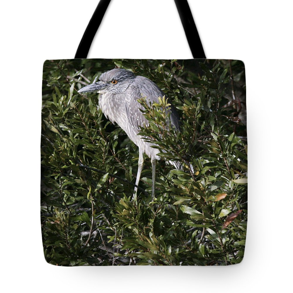 Bird Tote Bag featuring the photograph Hiding by Phill Doherty