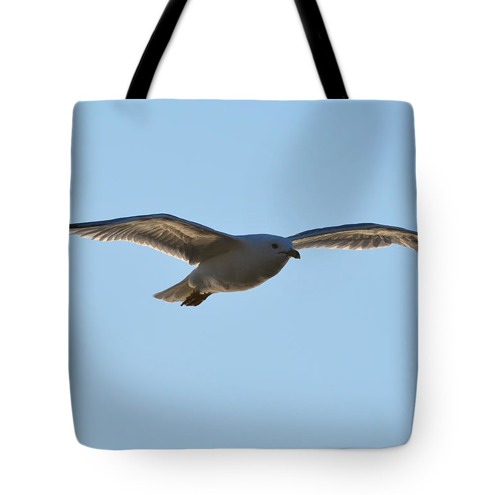 Seagull Tote Bag featuring the photograph High Above The Shore by Richard Andrews