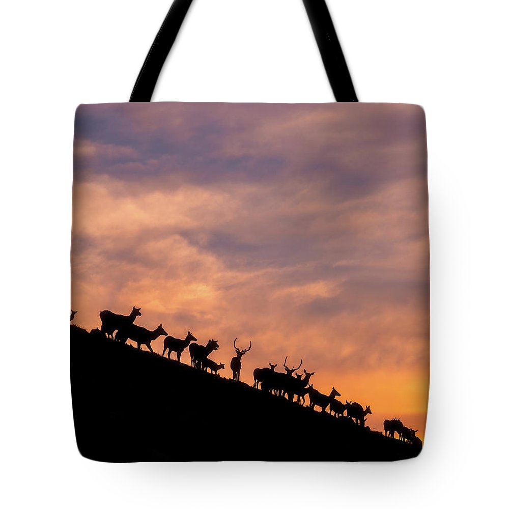 Elk Tote Bag featuring the photograph Hillside Elk by Darren White