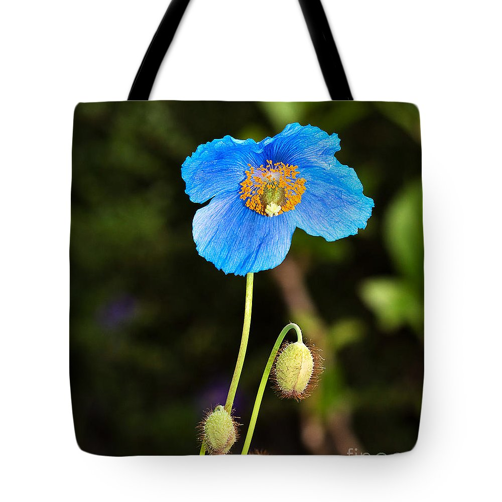 Flower Tote Bag featuring the photograph Himalayan Blue Poppy by Louise Heusinkveld