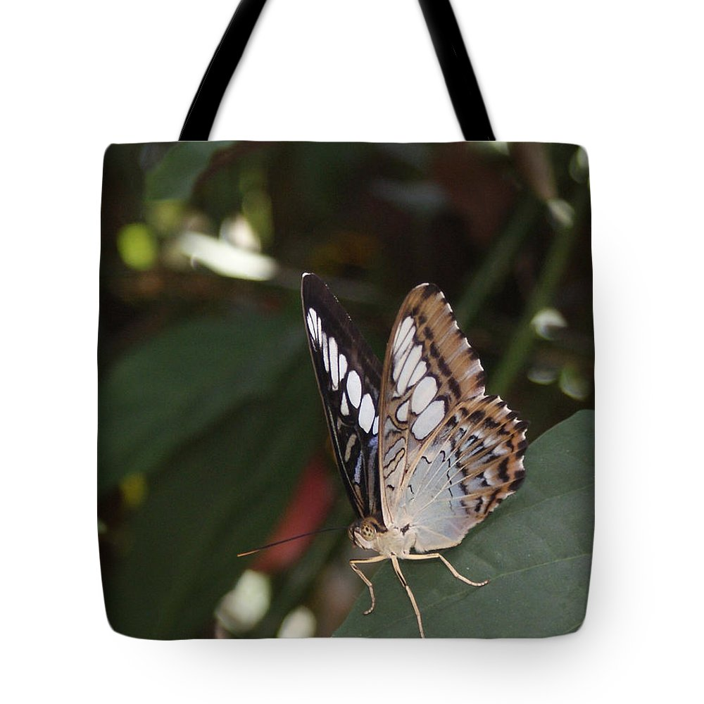 Butterfly Tote Bag featuring the photograph Hints Of Blue by Shelley Jones