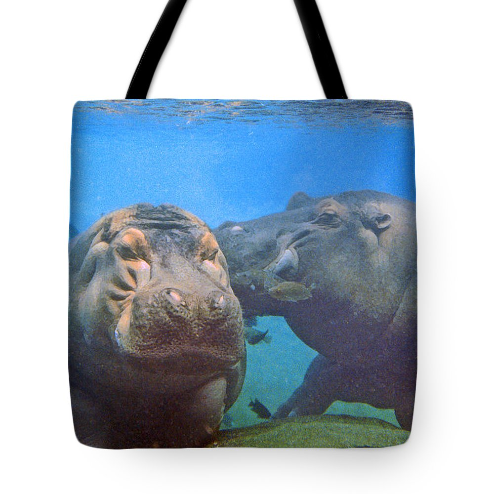 Animals Tote Bag featuring the photograph Hippos In Love by Steve Karol