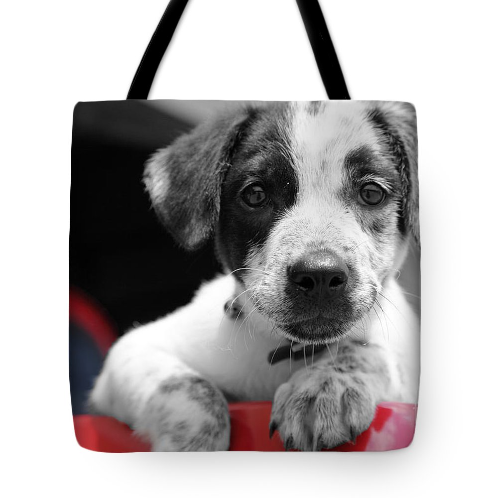Dogs Tote Bag featuring the photograph Hmmm by Amanda Barcon