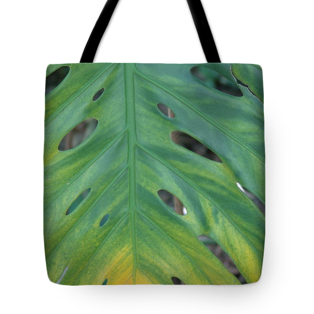 Plant Tote Bag featuring the photograph Holy Leaf by Florene Welebny