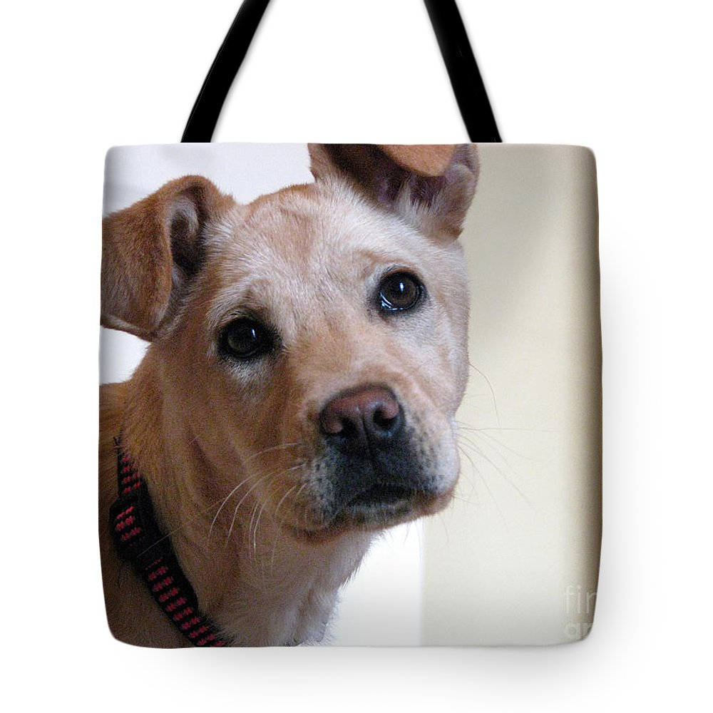 Dog Tote Bag featuring the photograph Honey by Amanda Barcon