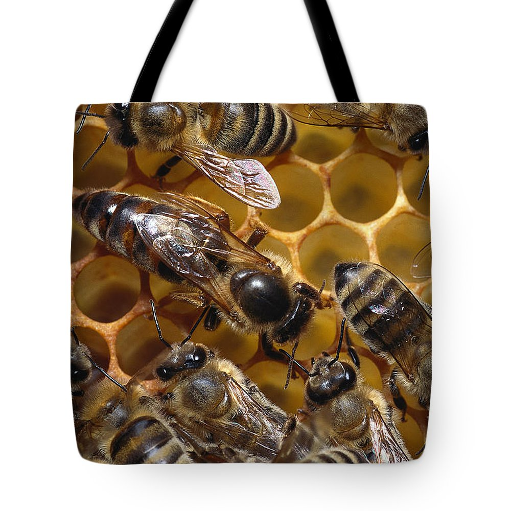 Honeybee Tote Bag featuring the photograph Honey Bees by Thorsten Klapp