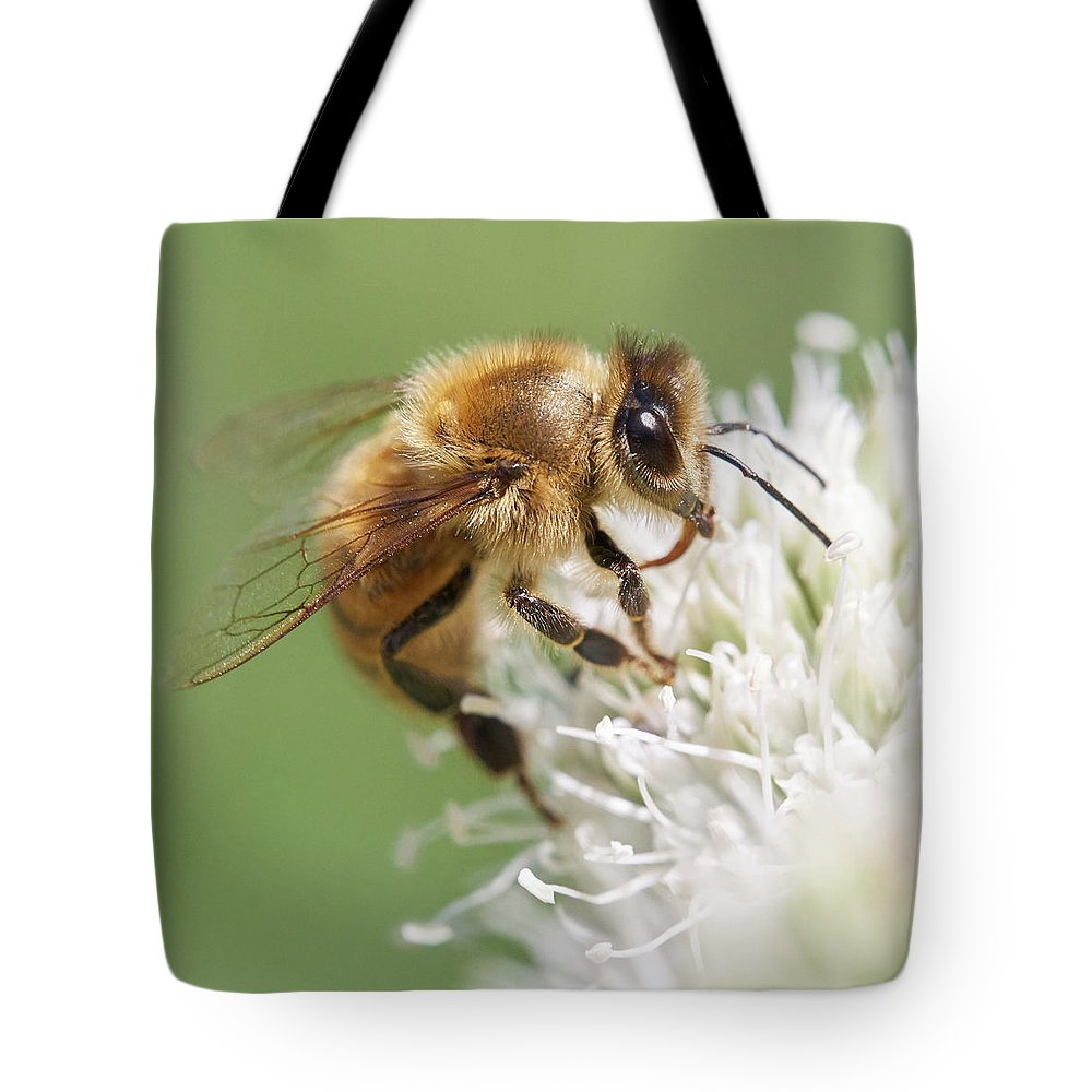 Apidae Tote Bag featuring the photograph Honeybee on Rattlesnake Master by Jim Hughes