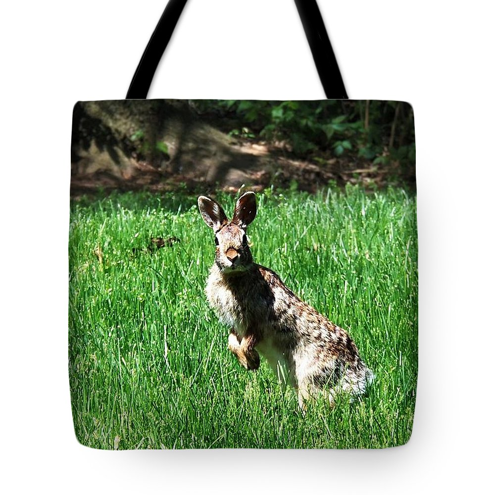 Rabbit Tote Bag featuring the photograph Hop by Cassandra Dice