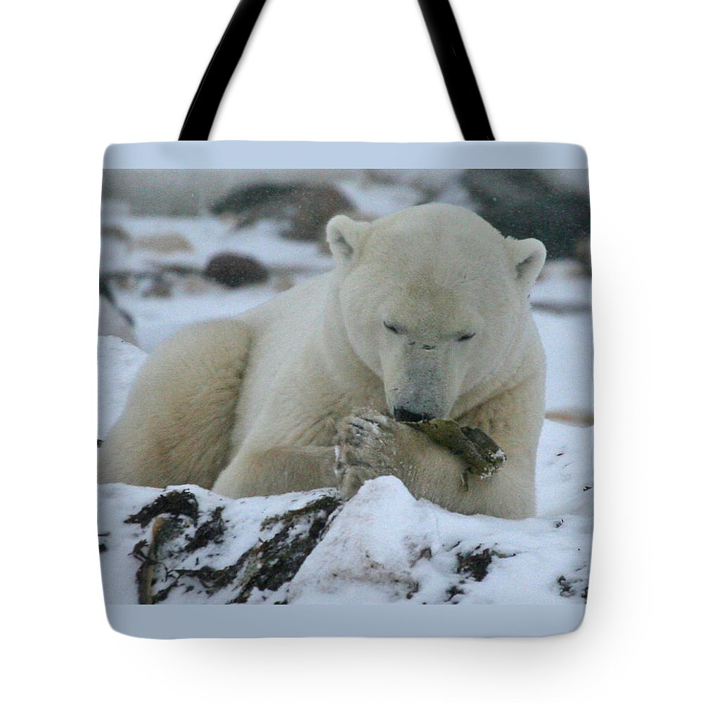 Polar Bear Tote Bag featuring the photograph Hor D'oeuvres by Connie Jeffcoat