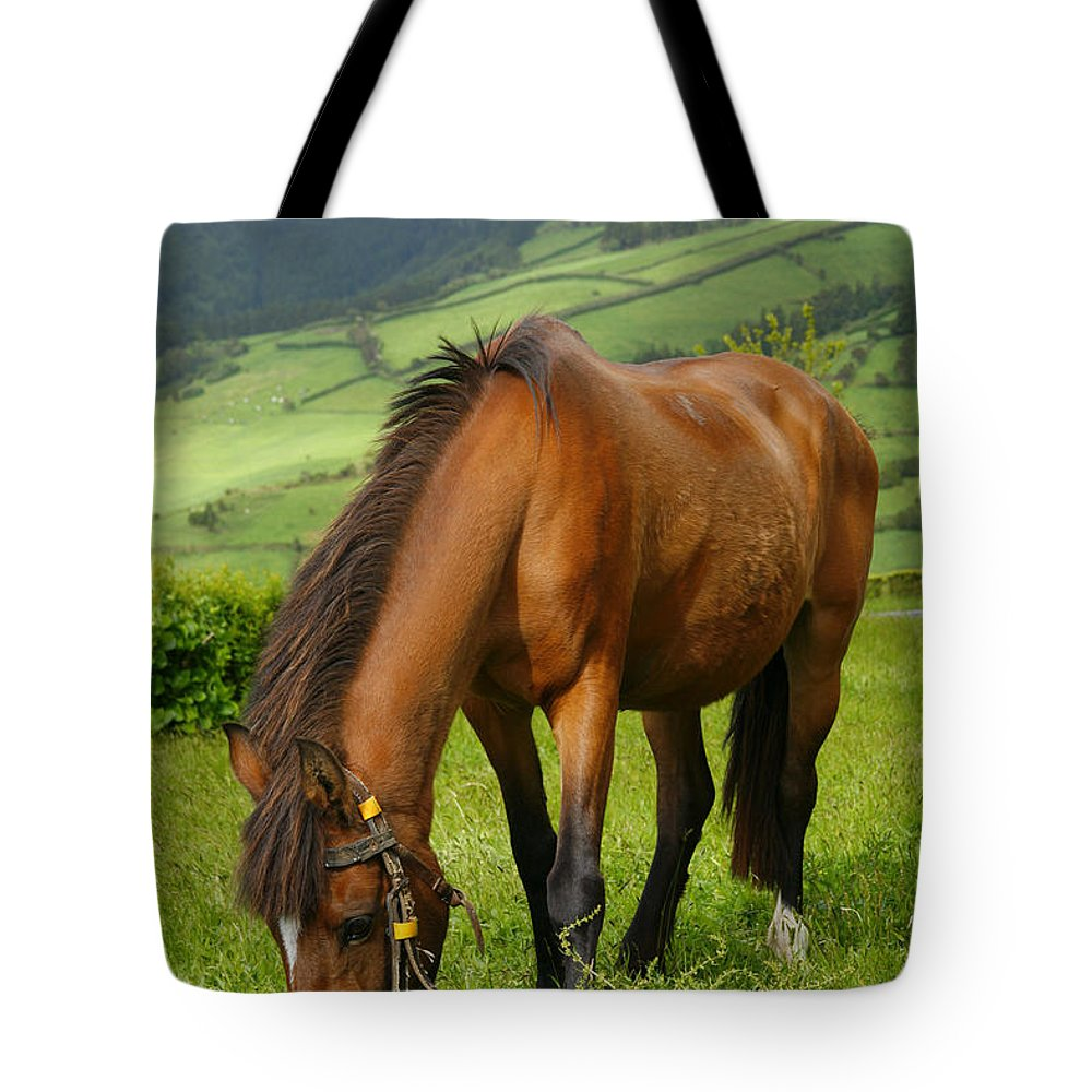 Animals Tote Bag featuring the photograph Horse Grazing by Gaspar Avila