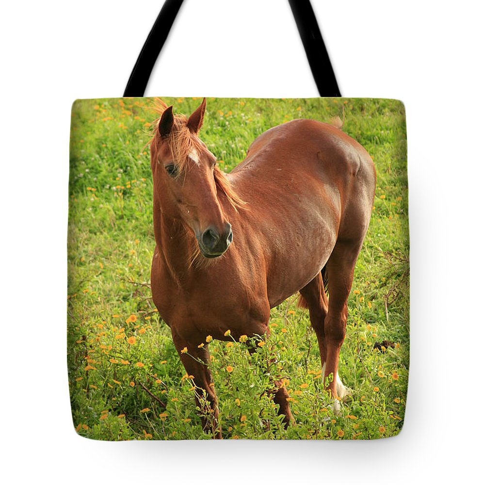 Animals Tote Bag featuring the photograph Horse In A Field With Flowers by Gaspar Avila