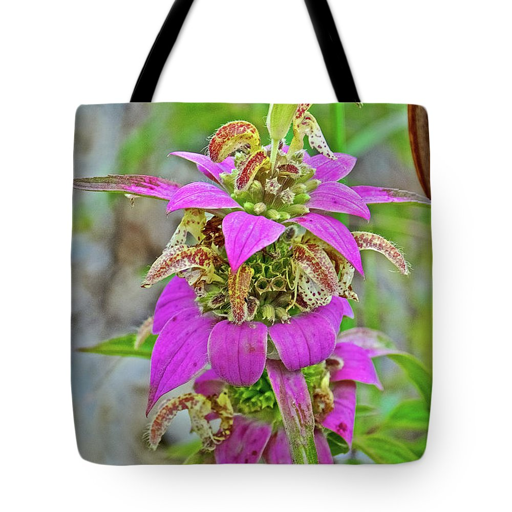 Horsemint On Trail To North Beach Park In Ottawa County Tote Bag featuring the photograph Horsemint On Trail To North Beach Park In Ottawa County, Michigan by Ruth Hager