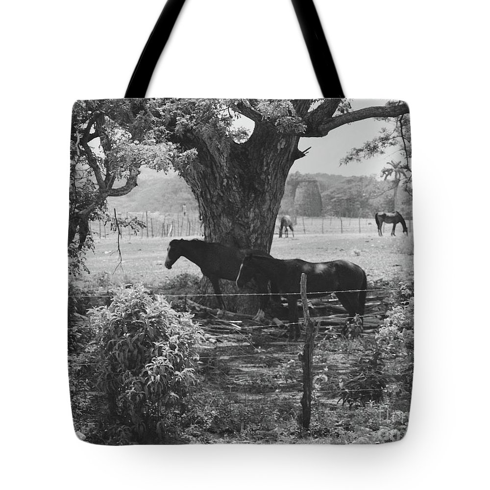 Horses Tote Bag featuring the photograph Horses In The Pasture by Michelle Powell
