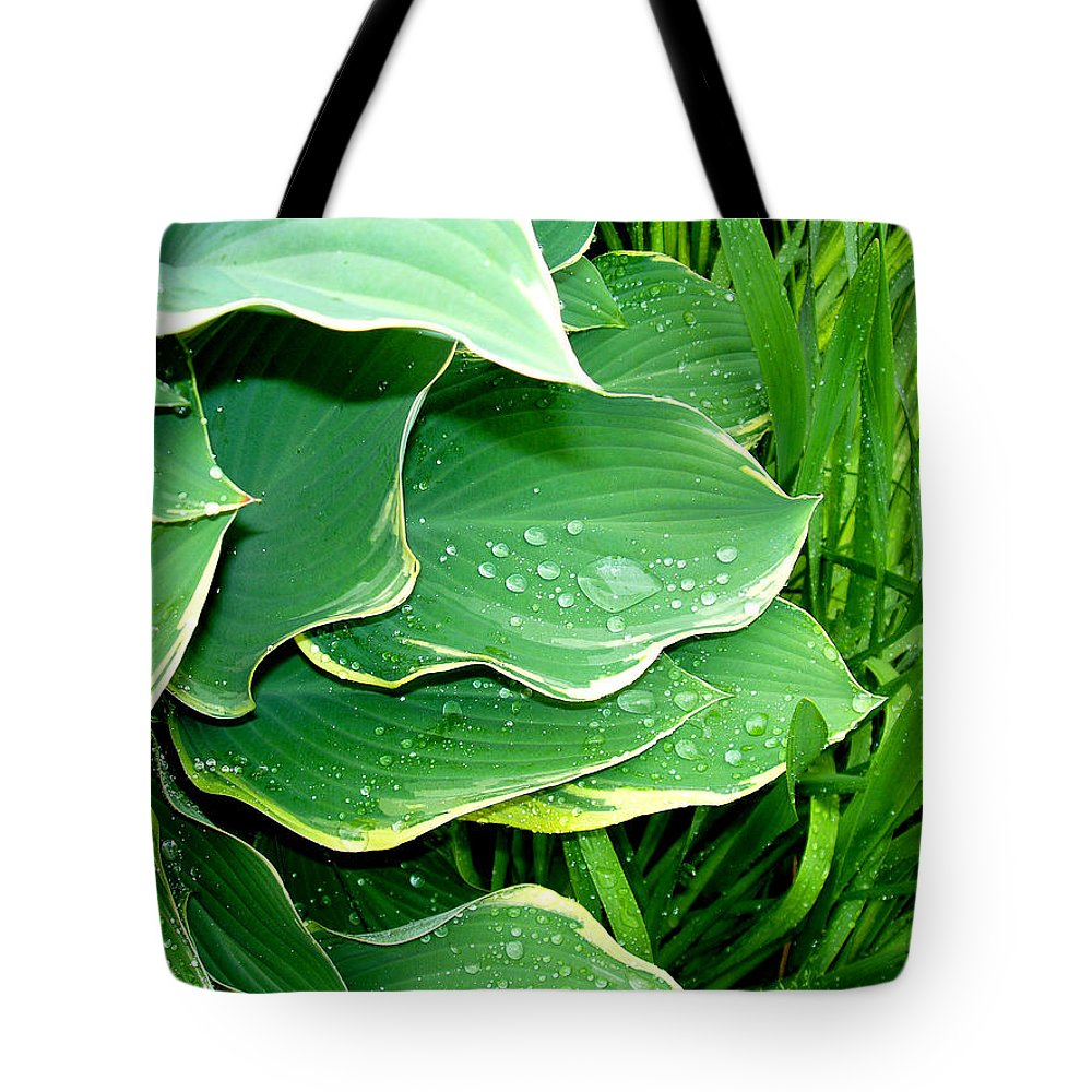 Hostas Tote Bag featuring the photograph Hosta Leaves And Waterdrops by Nancy Mueller