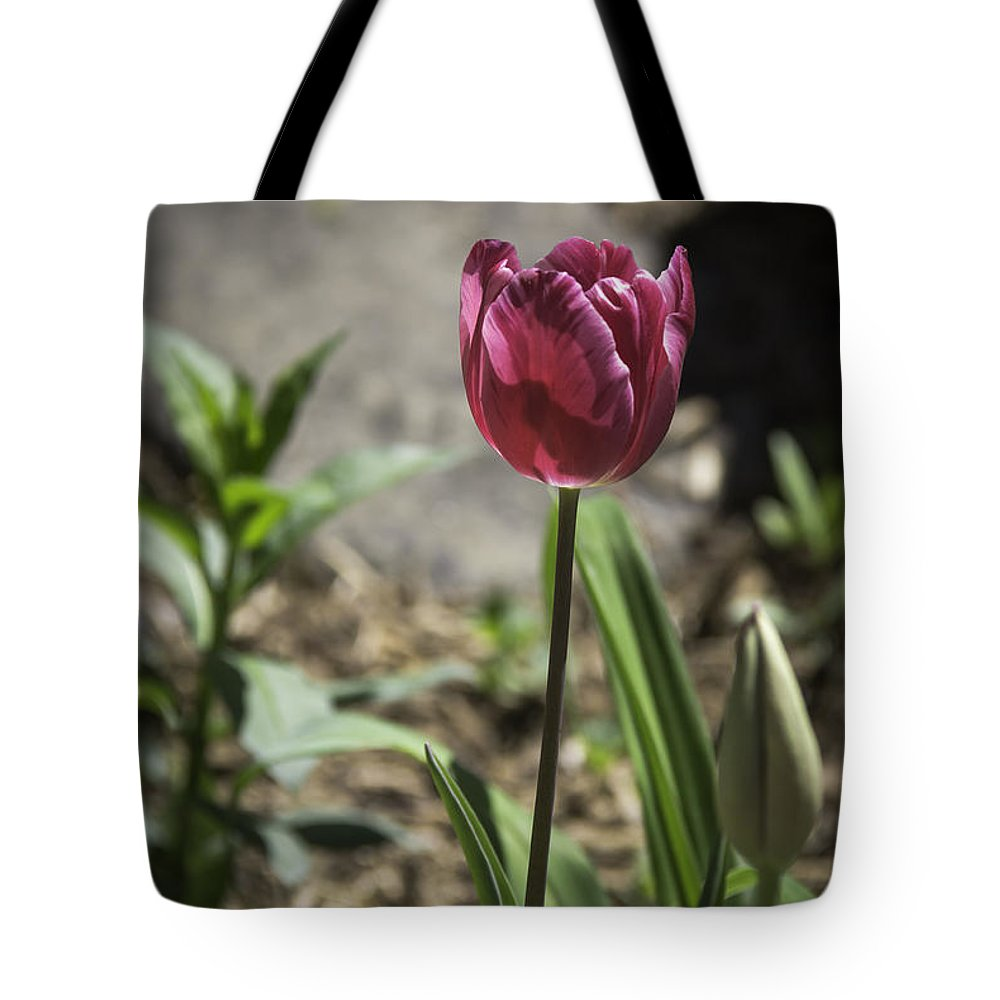 Flowers Tote Bag featuring the photograph Hot Pink Tulip by Teresa Mucha
