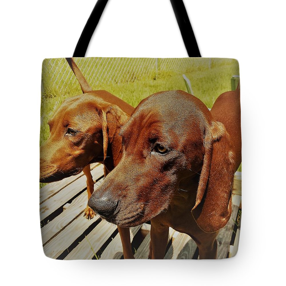 Hounds Redbone Dogs Hunting Animals Cute Tote Bag featuring the photograph Hounds by Lee Barrett