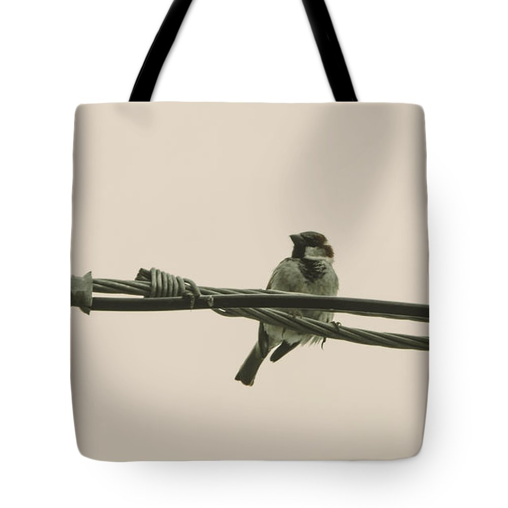 House Sparrow Tote Bag featuring the photograph House Sparrow by Alicia Collins
