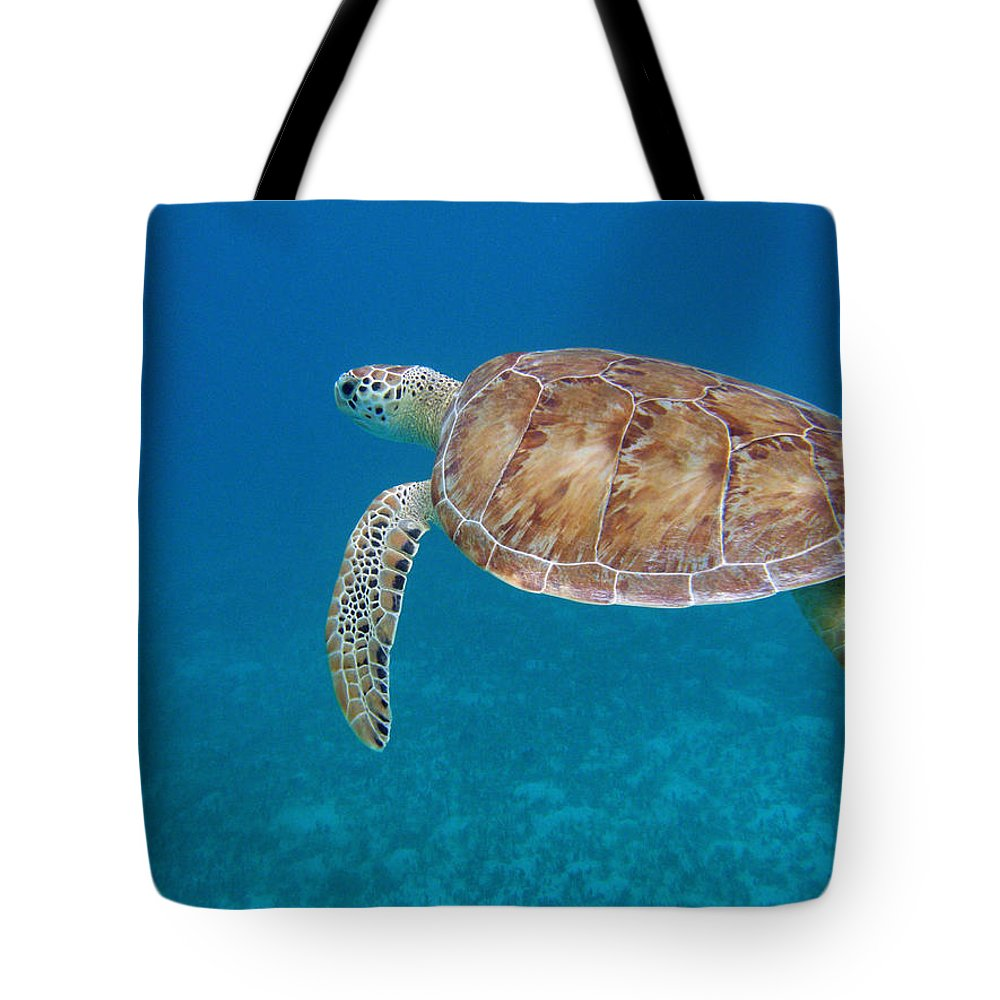 Green Sea Turtle Tote Bag featuring the photograph How Green It Is by Kimberly Mohlenhoff