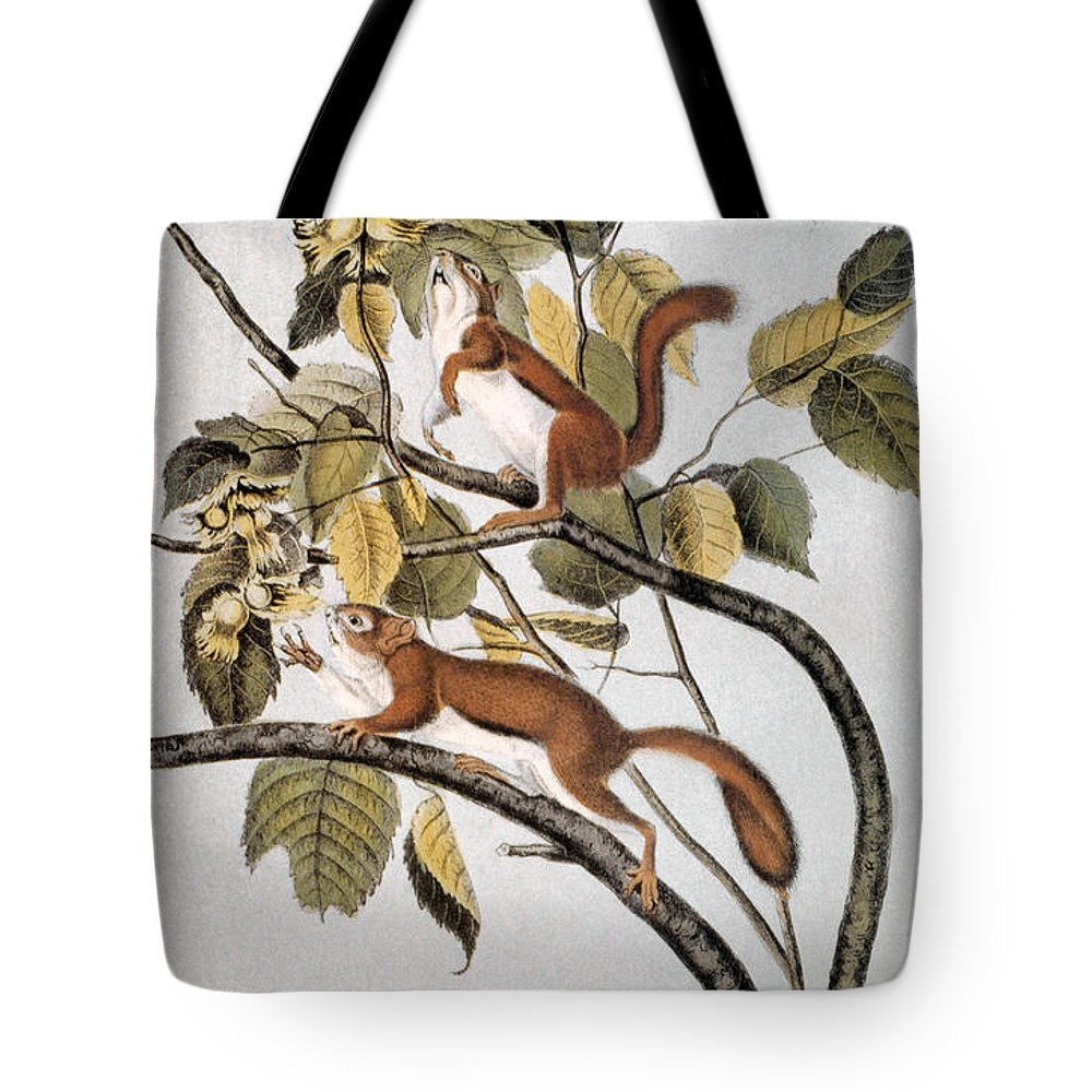 1846 Tote Bag featuring the photograph Hudsons Bay Squirrel by Granger