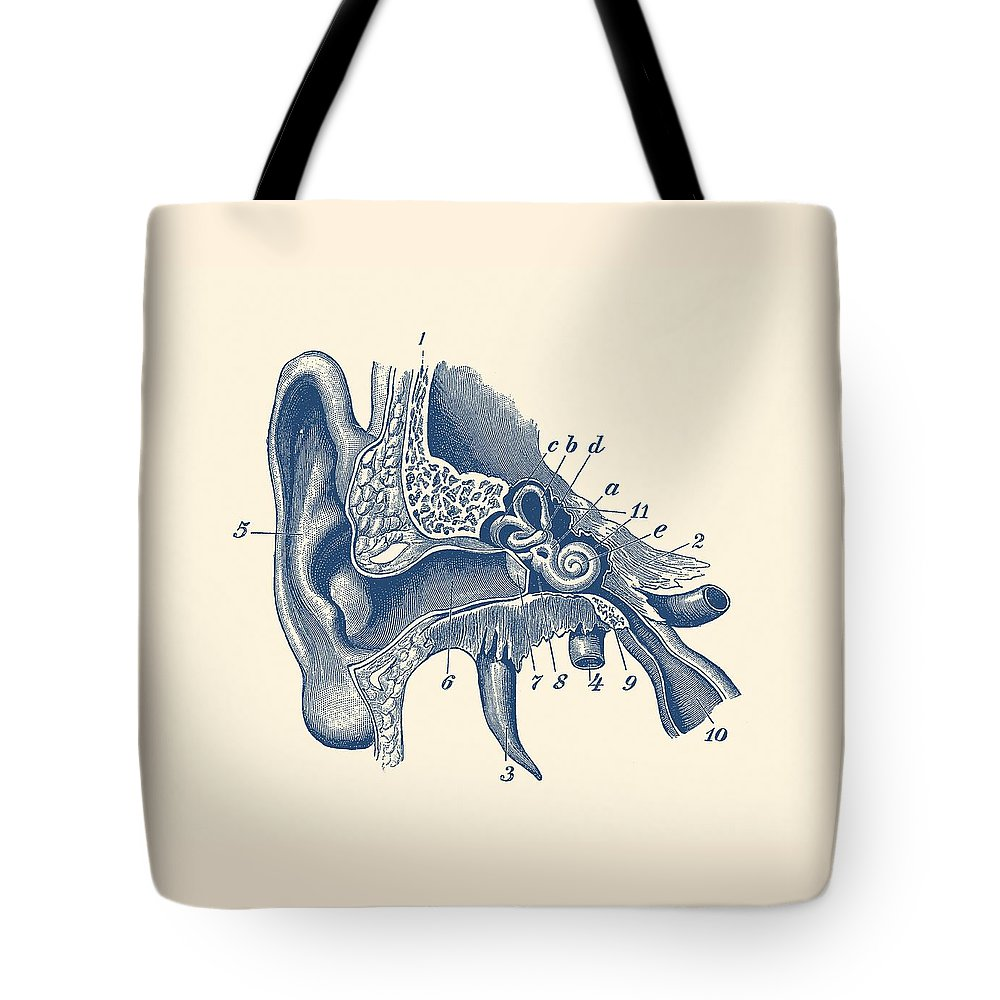 Human Inner Ear Anatomy Diagram - Vintage Print Tote Bag for Sale by ...