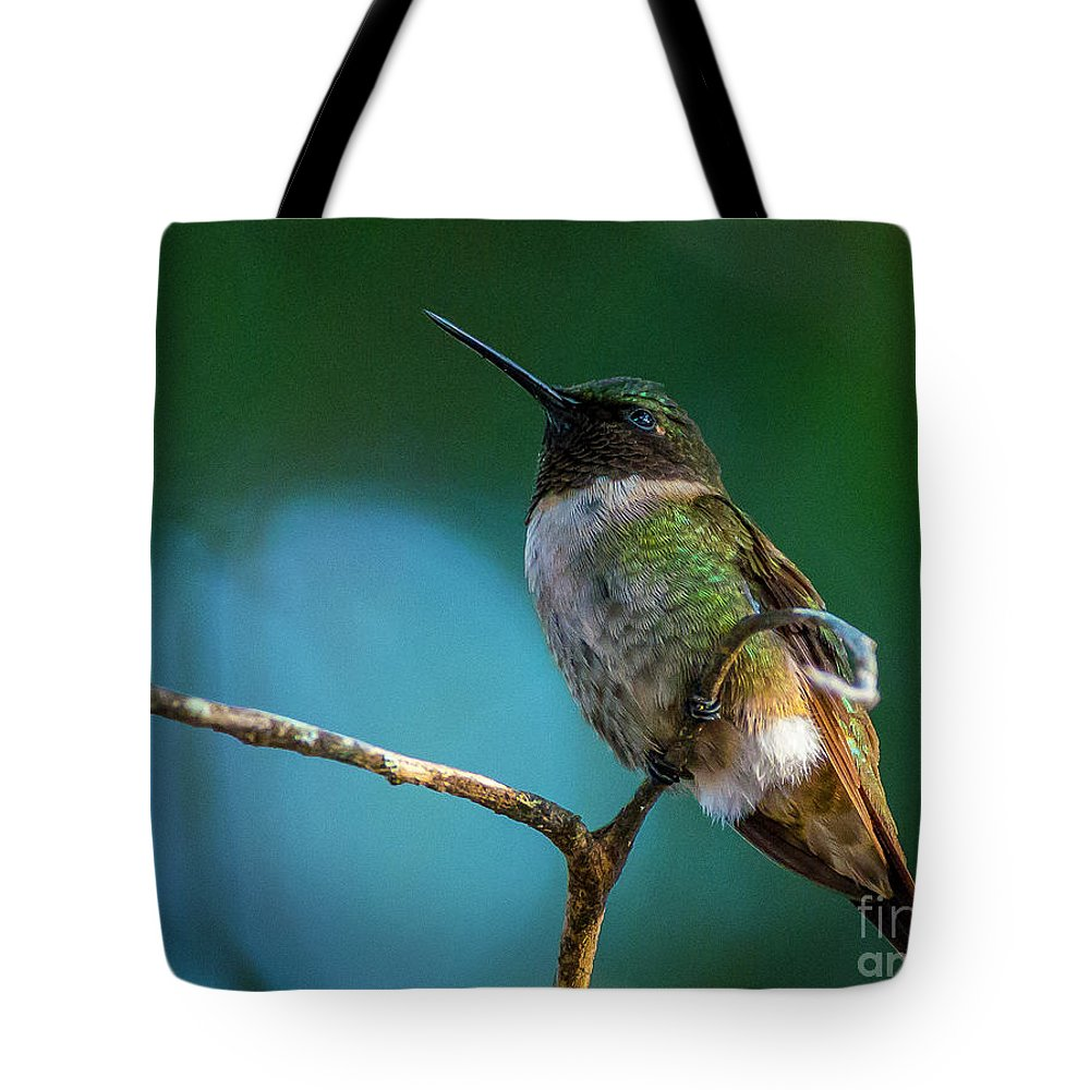 Hummingbird Tote Bag featuring the photograph Hummingbird At Rest by Bob Marquis