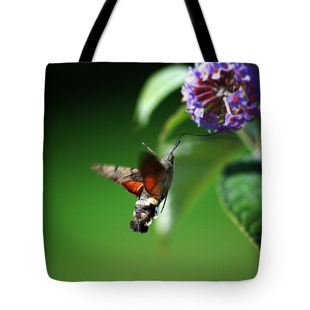 Hummingbird Hawk Moth Tote Bag featuring the photograph Hummingbird Hawk Moth - Five by P Donovan