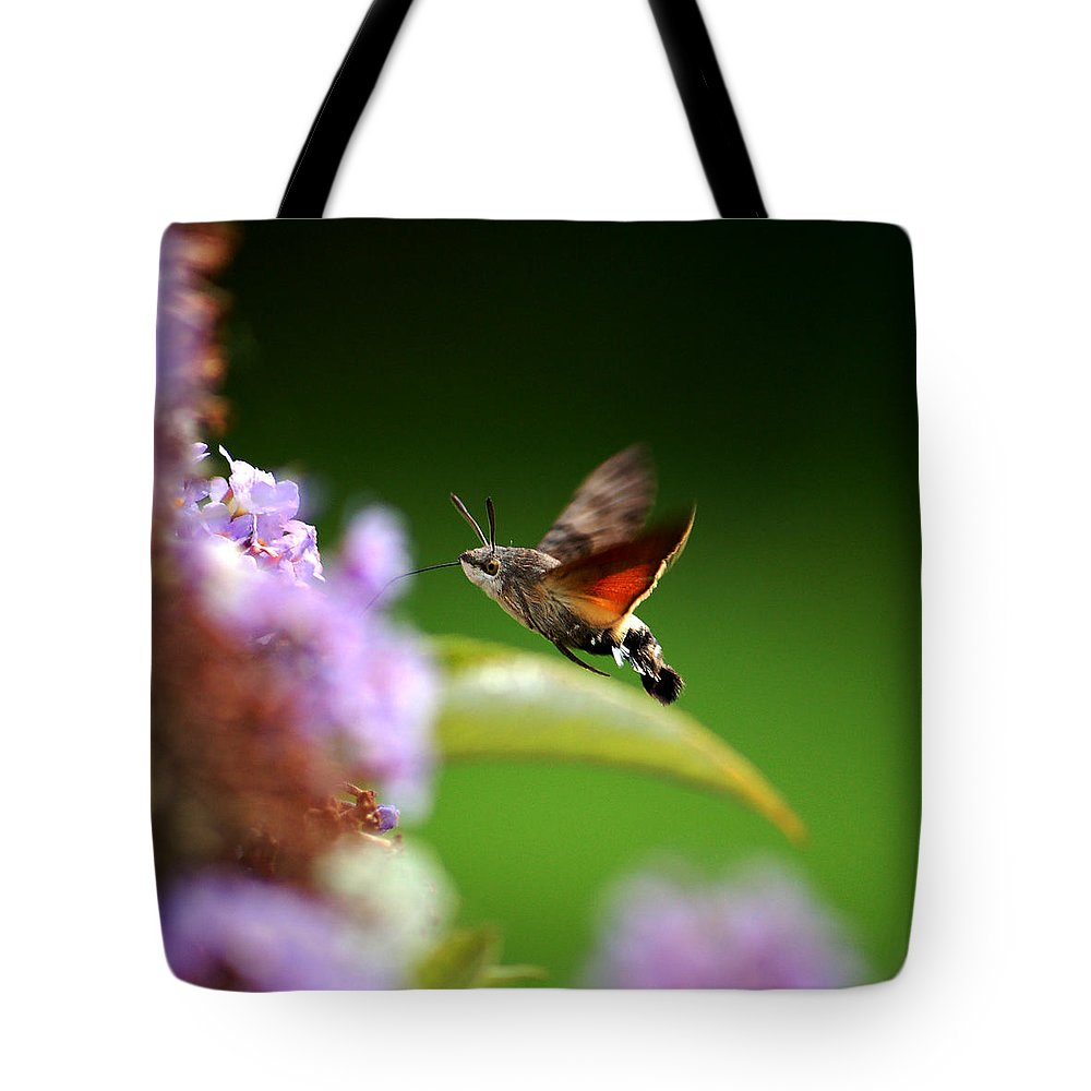 Hummingbird Hawk Moth Tote Bag featuring the photograph Hummingbird Hawk Moth - Four by P Donovan