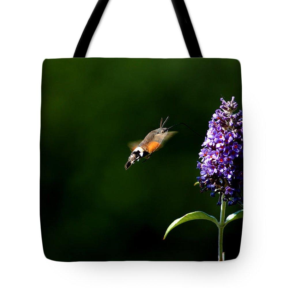 Hummingbird Hawk Moth Tote Bag featuring the photograph Hummingbird Hawk Moth - Three by P Donovan