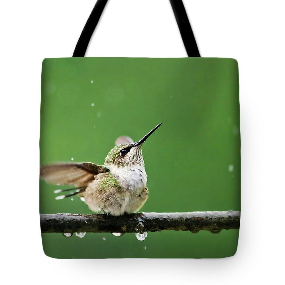 Hummingbird Tote Bag featuring the photograph Hummingbird In The Rain by Christina Rollo