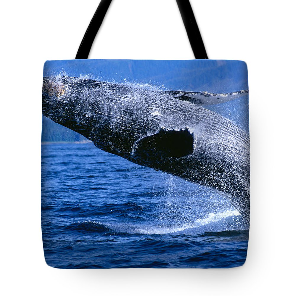 Animal Art Tote Bag featuring the photograph Humpback Full Breach by John Hyde - Printscapes