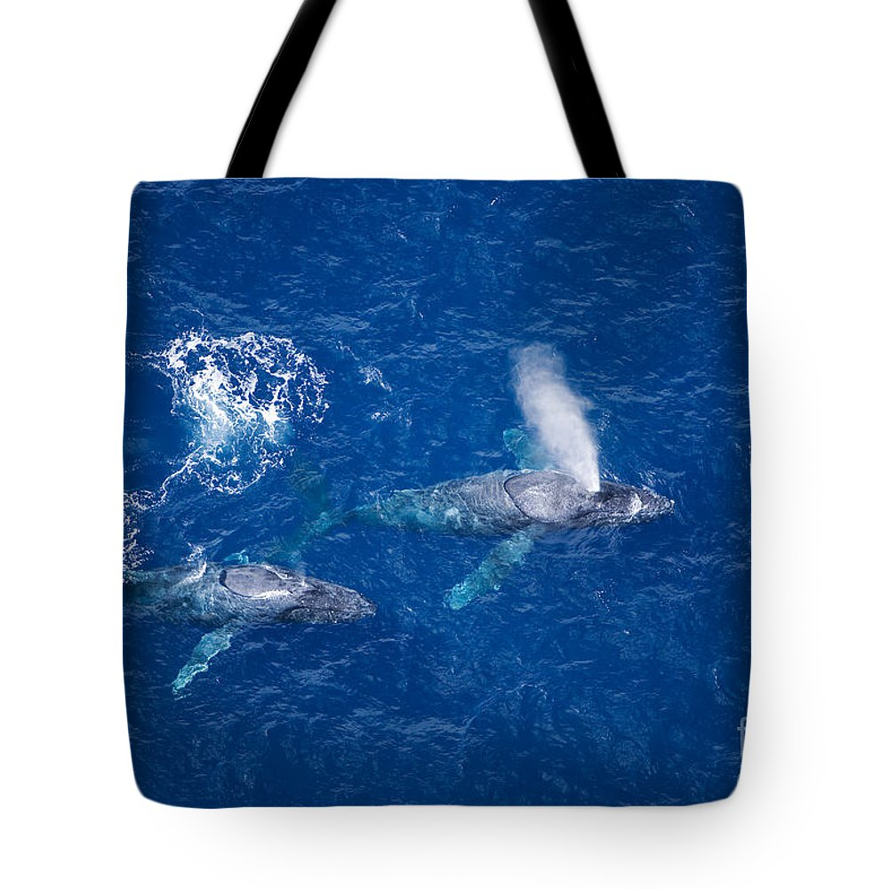 Above Tote Bag featuring the photograph Humpback Whales by Ron Dahlquist - Printscapes