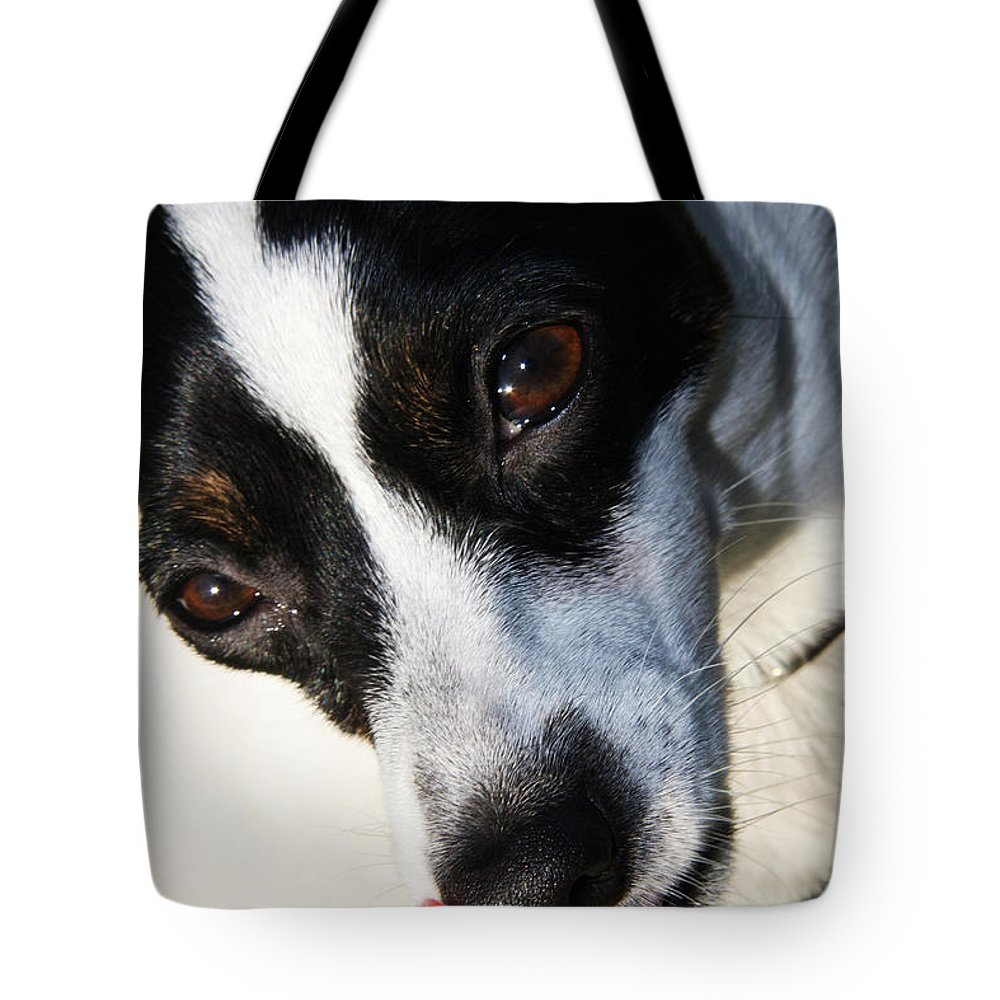 Pet Tote Bag featuring the photograph Hungry Dog by Jorgo Photography - Wall Art Gallery