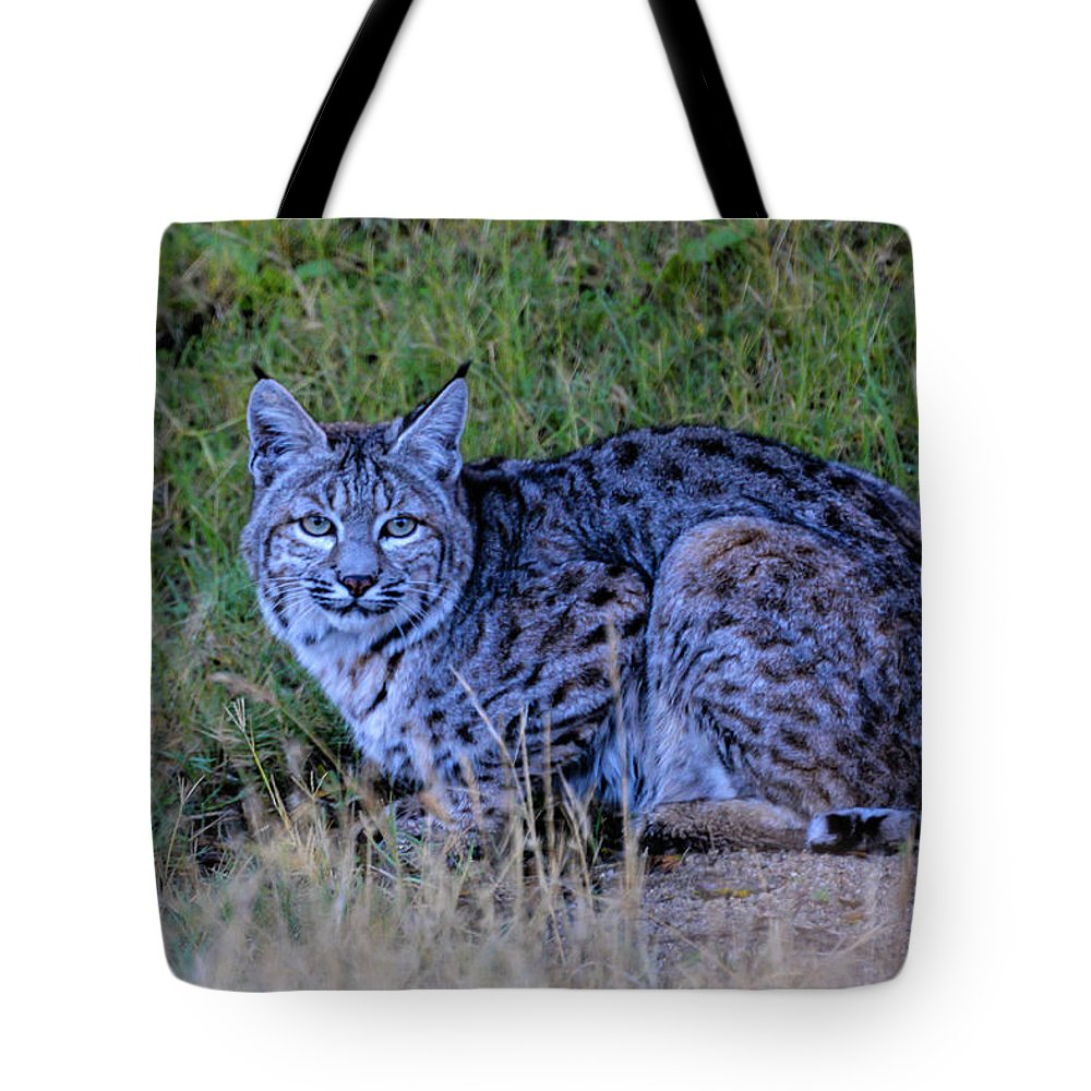Bobcat Tote Bag featuring the photograph Hunter by Michael Allred