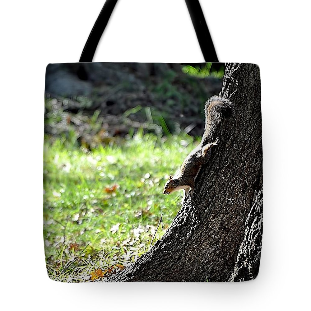 Animals Tote Bag featuring the photograph Hunting Acorns by Jan Amiss Photography