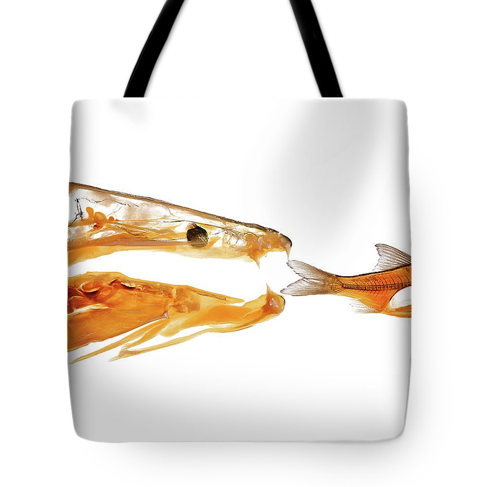 Fish Tote Bag featuring the photograph Hunting Fish Plastination by Christoph Von Horst