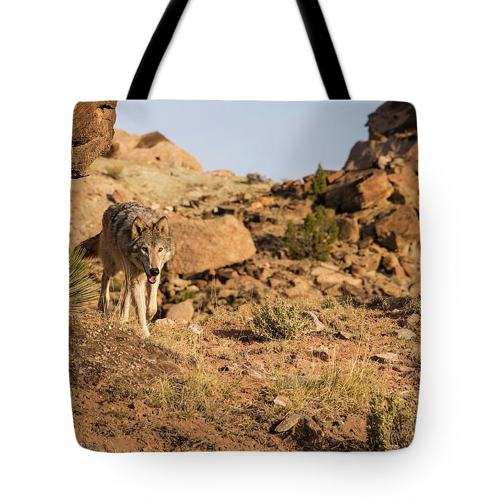 Wolf Tote Bag featuring the photograph Hunting wolf by Roy Nierdieck