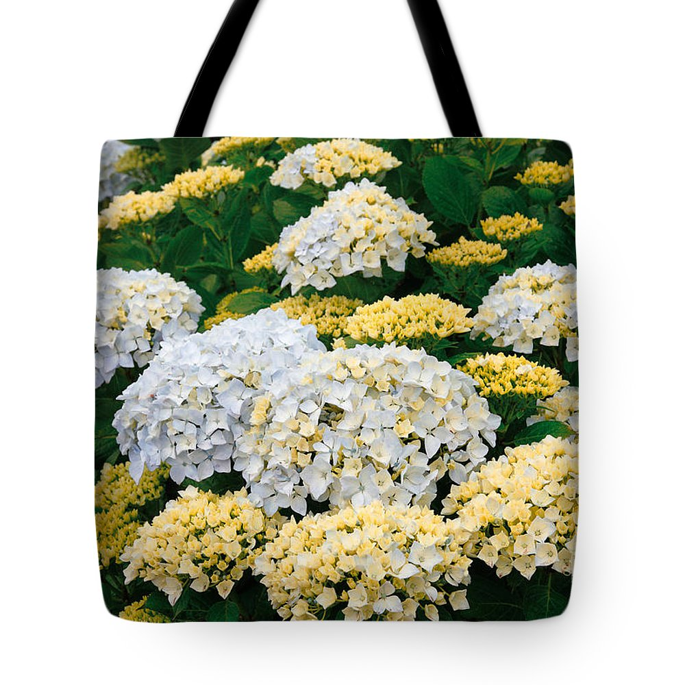 Hydrangea Tote Bag featuring the photograph Hydrangeas Blooming by Gaspar Avila
