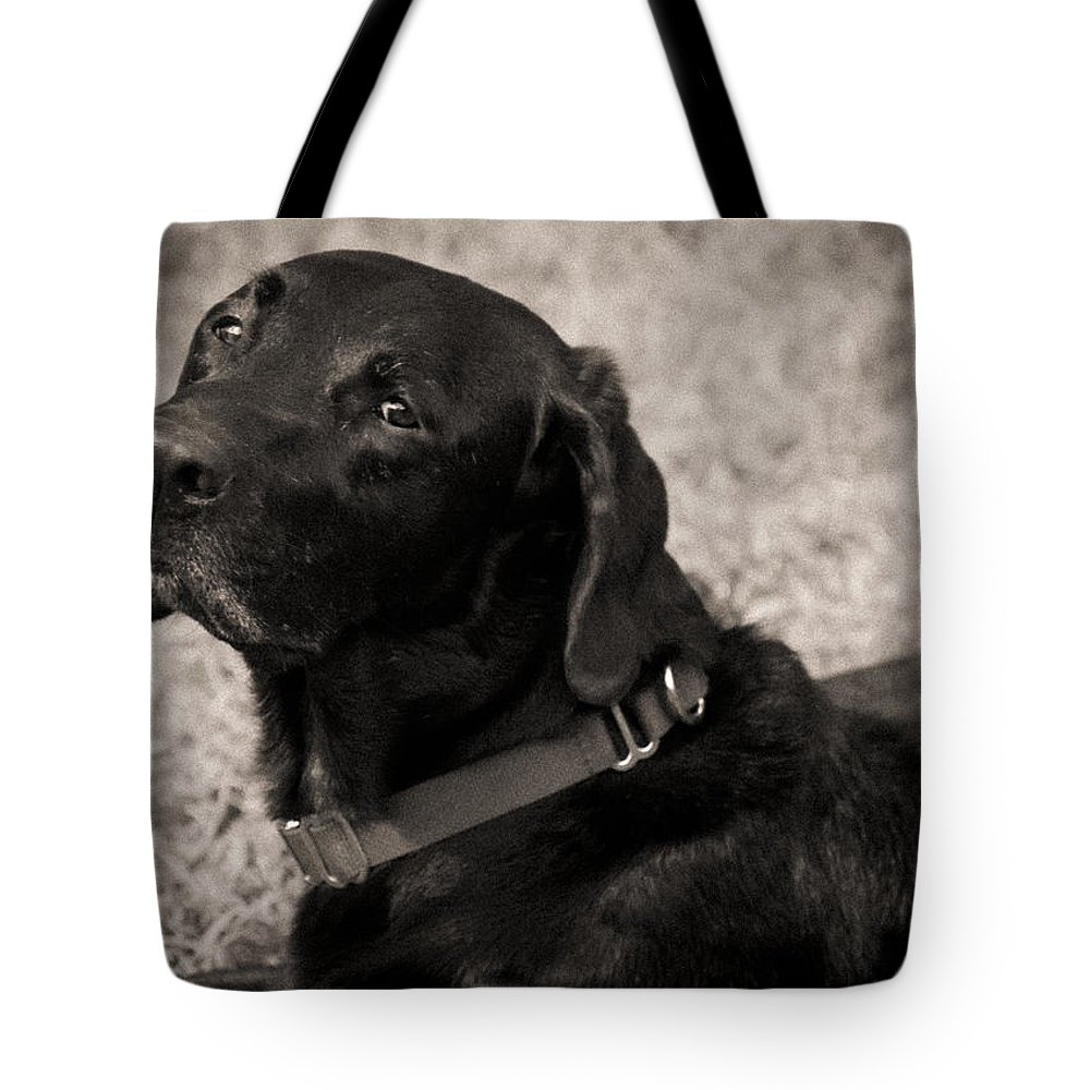 Black Lab Tote Bag featuring the painting I Am Being Good by Roger Wedegis