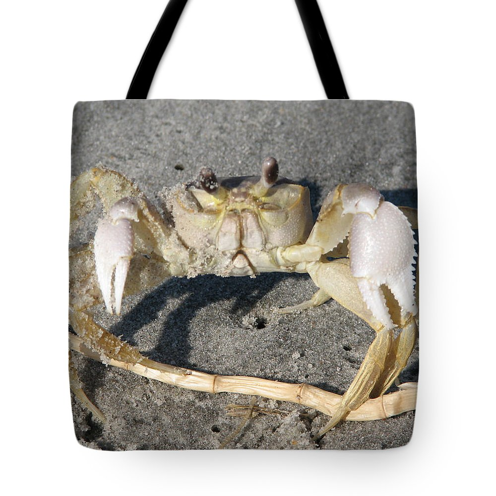 Crab Tote Bag featuring the photograph I Feel Crabby by Stacey May