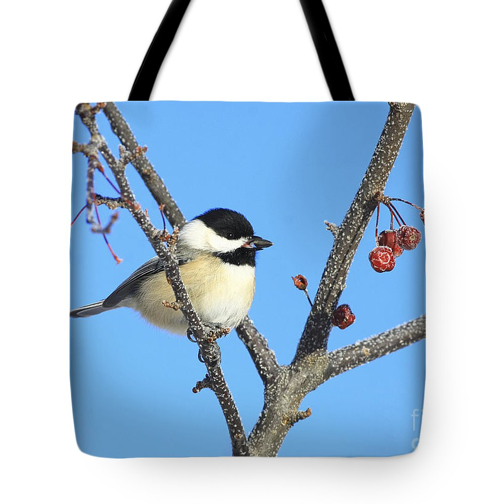 Bird Tote Bag featuring the photograph I Got My Seed by Deborah Benoit