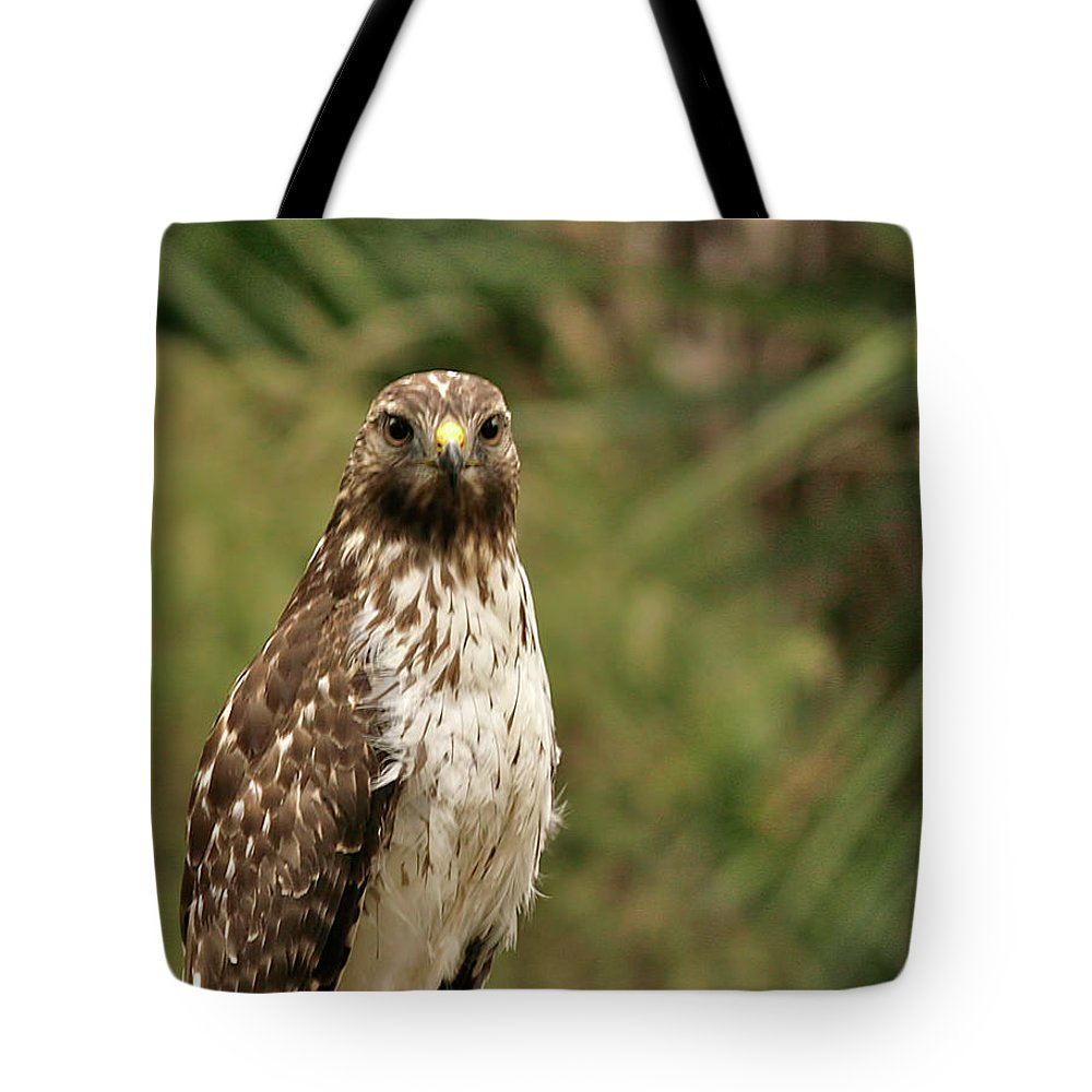 Bird Tote Bag featuring the photograph I See You by Phill Doherty