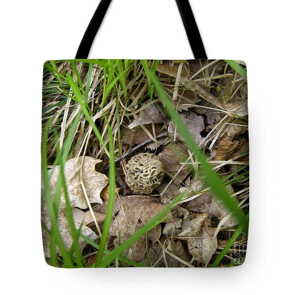 Morel Tote Bag featuring the photograph I Spy - Morel Mushroom by Angie Rea