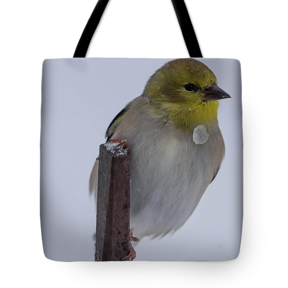 American Goldfinch Tote Bag featuring the photograph Iced Gold by MCM Photography